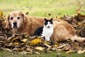 Cat and dog lying in the autumn leaves.
